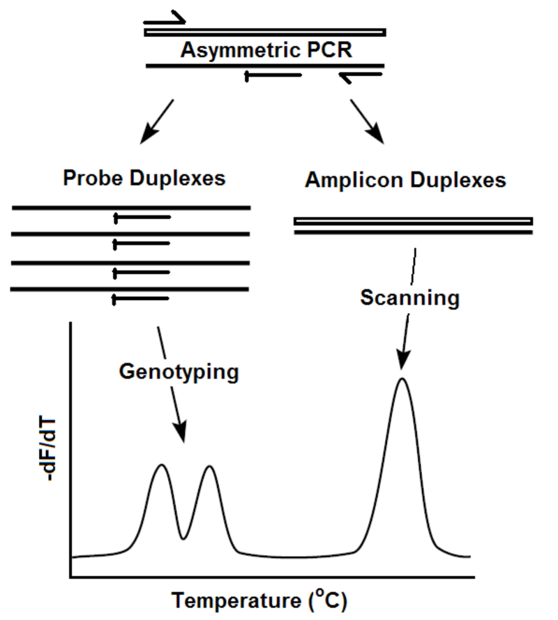 PCR Troubleshooting and Optimization